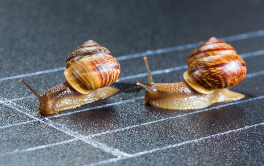 Snail Olympics (Snailympics) May be Coming to Salt Lake